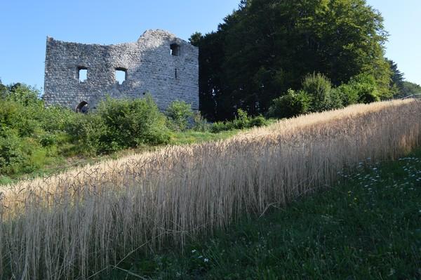 Kulturabenteuer Seetal: Burgruine Nünegg Lieli